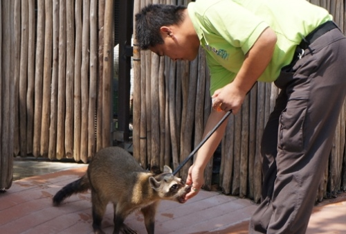 river-safari-singapore-animal-encounters